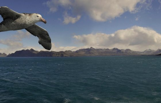 Albatross the film - Chris Jordan